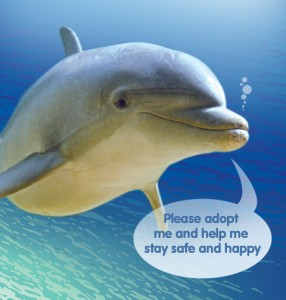adopt-dolphin